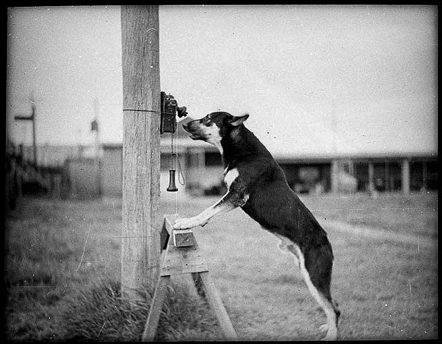 Police Dog Tess