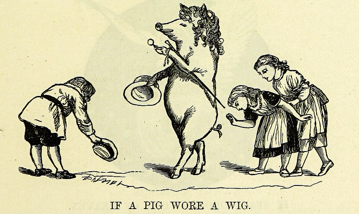 if a pig wore a wig