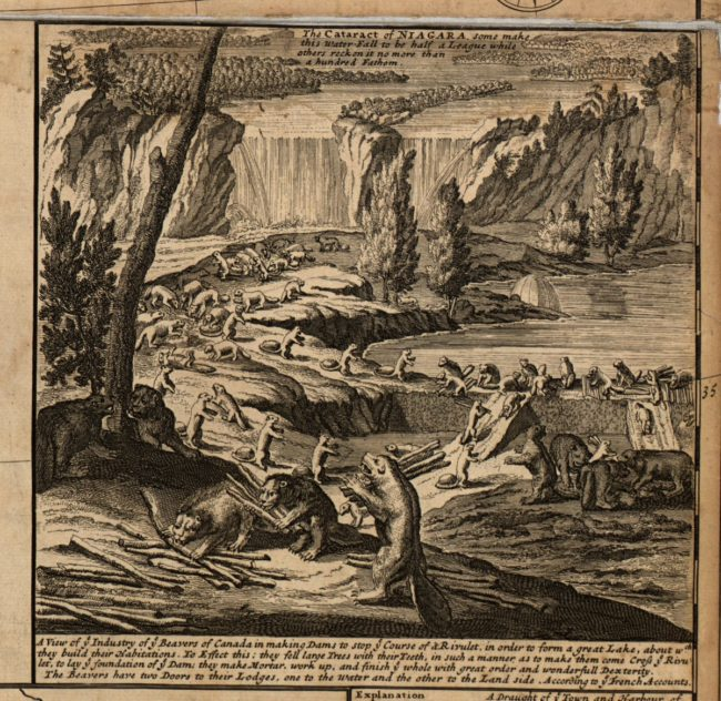 beavers-build-a-dam-herman-moll-1732